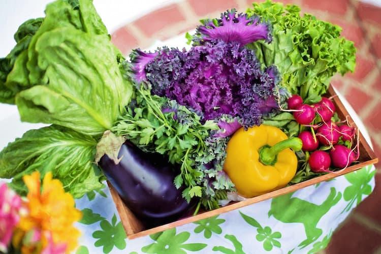 Saisonkalender Gemüse | Premium